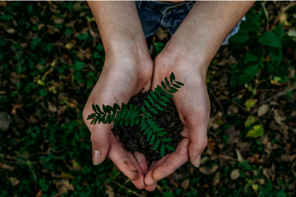 image of hands holding a plant